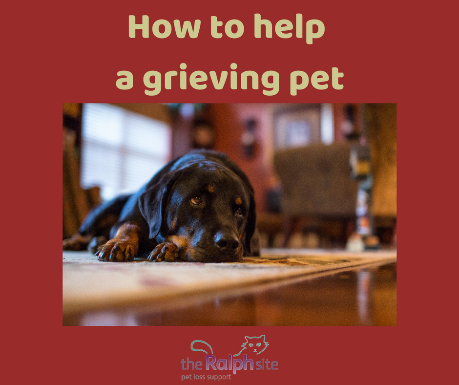 How to help a grieving pet
