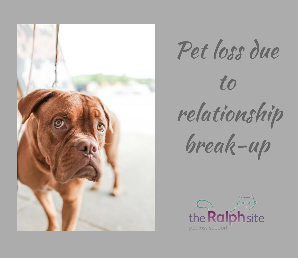 Losing A Pet Because Of A Relationship Breakup